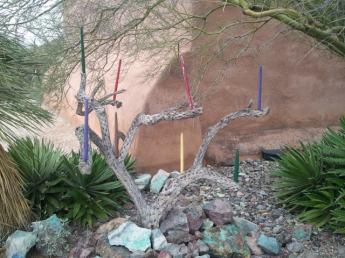 Candelabra made from desert tree