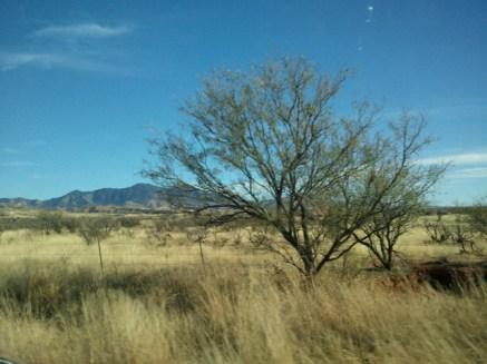 Grass, tree, mountain