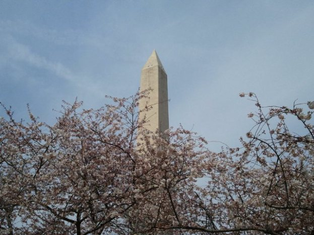 Washington Monument behind the blossoms